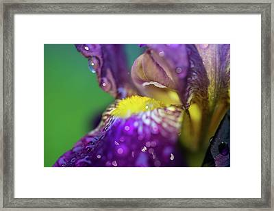 Catching Raindrops  Framed Print