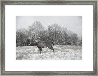Catching Snow Flakes Deer Art Framed Print