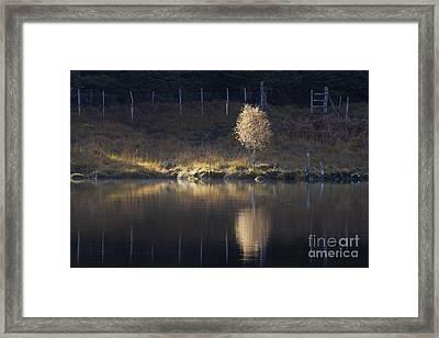 Catching The Light Framed Print