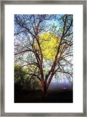 Catching The Light Of The Moon Framed Print