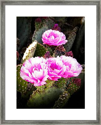 Catching The Light Framed Print