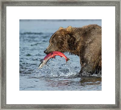 Framed Print featuring the photograph Catching The Prize by Cheryl Strahl