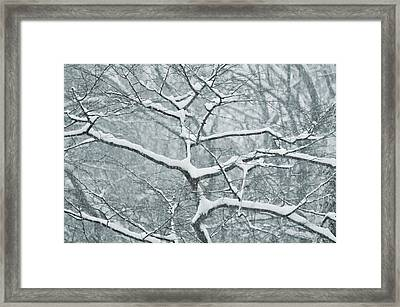 Catching The Snow Framed Print by JAMART Photography