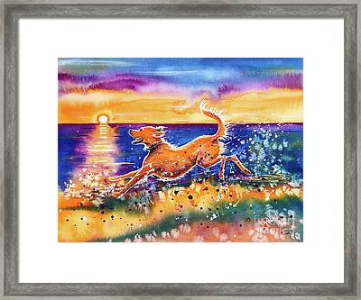 Catching The Sun Framed Print