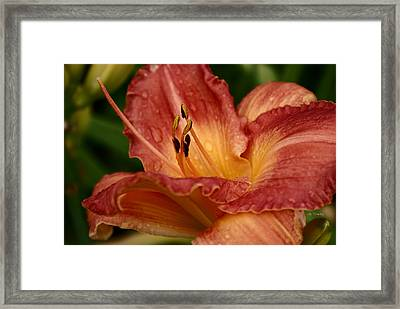 Catching Water Drops Framed Print