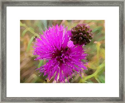 Framed Print featuring the digital art Catclaw Pink Mimosa  by Shelli Fitzpatrick