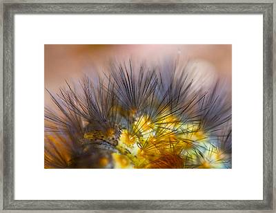 Caterpillar Hair Framed Print
