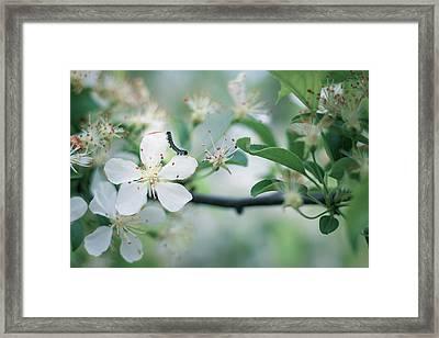 Caterpillar On A Tree Blossom Framed Print