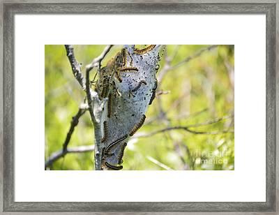 Caterpillars #2 Framed Print by Stephanie  Varner