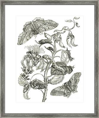 Caterpillars, Butterflies, And Flower Framed Print
