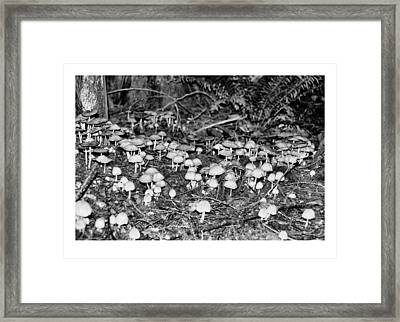 Caterpillars Playground 1 Framed Print by J D Banks