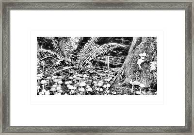 Caterpillars Playground 2 Framed Print by J D Banks