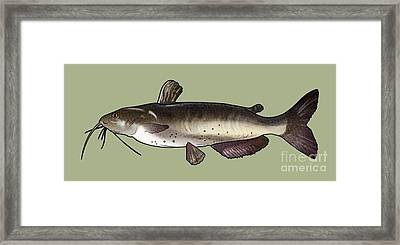Catfish Drawing Framed Print by A C