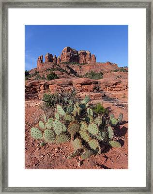 Cathedral Rock Cactus Grove Framed Print