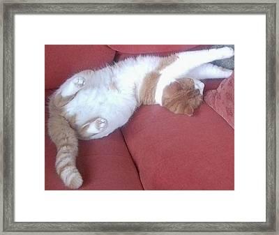 Catnap - Sleeping Ginger Cat Framed Print