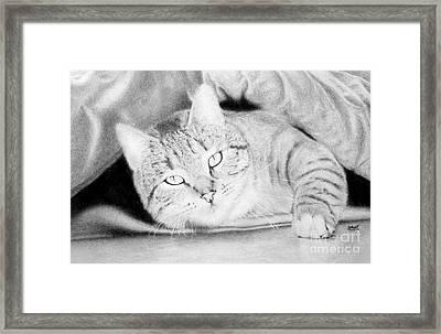 Catnap Framed Print by Stuart Attwell