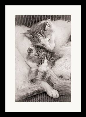Catnap Photographs Framed Prints