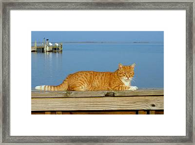 Cats 29 Framed Print by Joyce StJames