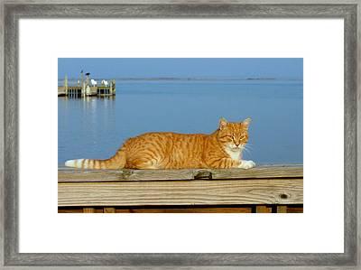 Cats 29 Framed Print by Joyce StJames