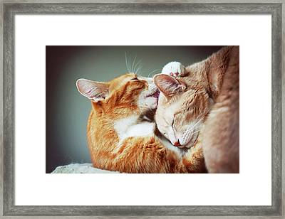 Cats Embrace Framed Print by Image(s) by Sara Lynn Paige