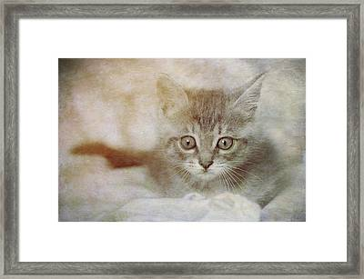 Cat's Eyes #07 Framed Print by Loriental Photography