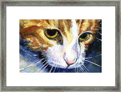 Cats Eyes 12 Framed Print by John D Benson