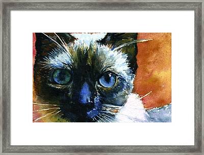 Cats Eyes 13 Framed Print by John D Benson
