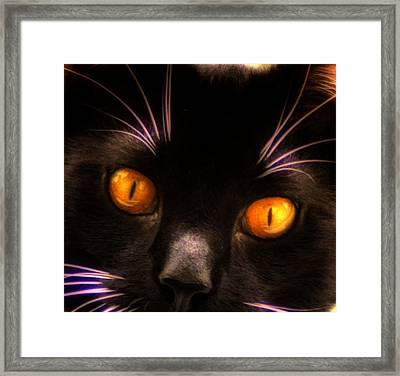 Cats Eyes Framed Print by Bill Cannon