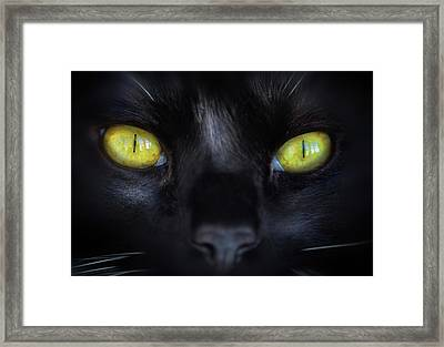 Cat's Eyes Framed Print