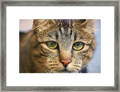Cats Eyes Digital Painting Framed Print by Sharon Talson