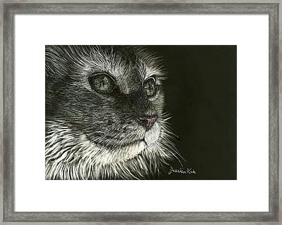 Cat's Gaze Framed Print by Jessica Kale
