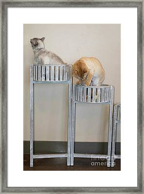 Cats In Baskets Framed Print