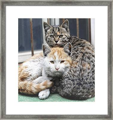 Cats Framed Print by Jiroyuan photography