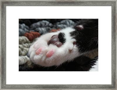 Framed Print featuring the photograph Cats Paw by Kim Henderson