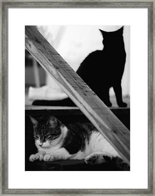 Cats Pose For Money And Fame Framed Print