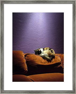 Cats Sleep In Odd Places Framed Print by Geerah Baden-Karamally