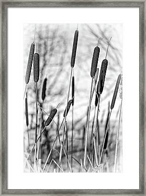 Cattail Dance Monochrome Framed Print