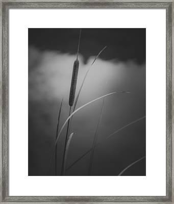 Cattail Framed Print