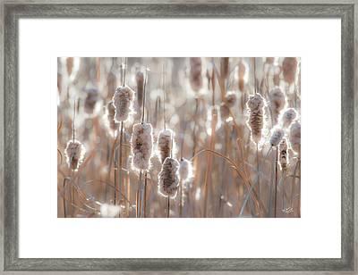 Cattail Light 1 Framed Print