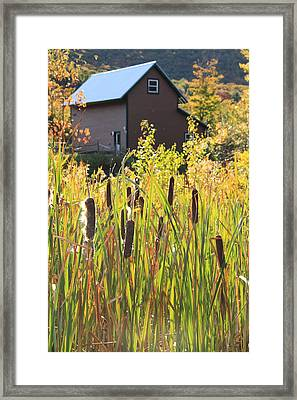 Cattails And Barn Framed Print