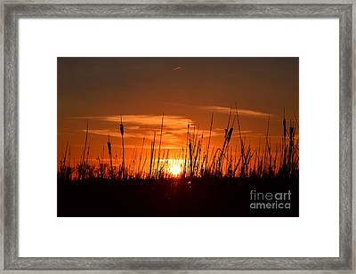Cattails And Twilight Framed Print