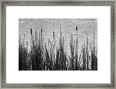 Cattails In A Minnesota Marsh Framed Print by Jim Hughes