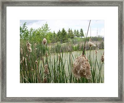 Framed Print featuring the photograph Cattails by Mary Mikawoz