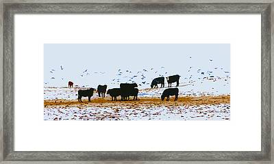 Cattle And Birds Framed Print