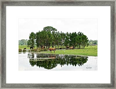 Cattle And Horse Ranch In Florida Framed Print