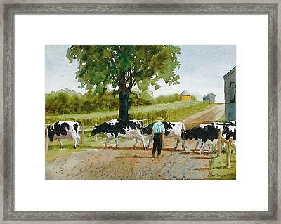 Cattle Crossing Framed Print by Faye Ziegler