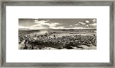 Cattle Drive Framed Print by Unknown
