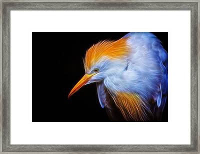 Cattle Egret Electrified Framed Print by David Gn