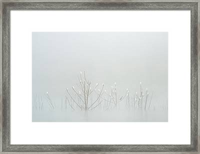 Cattle Egrets And A Cormorant Framed Print
