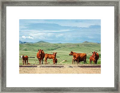 Cattle Guards Framed Print by Todd Klassy